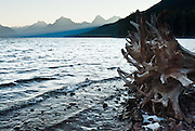 "The peaks of the Livingston Range rise above bleached tree roots on the shore of Lake McDonald at sunrise in Glacier National Park, Montana, USA. Since 1932, Canada and USA have shared Waterton-Glacier International Peace Park, which UNESCO declared a World Heritage Site (1995) containing two Biosphere Reserves (1976). Rocks in the park are primarily sedimentary layers deposited in shallow seas over 1.6 billion to 800 million years ago. During the tectonic formation of the Rocky Mountains 170 million years ago, the Lewis Overthrust displaced these old rocks over newer Cretaceous age rocks. Glaciers carved spectacular U-shaped valleys and pyramidal peaks as recently as the Last Glacial Maximum (the last ""Ice Age"" 25,000 to 13,000 years ago). Of the 150 glaciers existing in the mid 1800s, only 25 active glaciers remain in the park as of 2010, and all may disappear by 2020, say climate scientists."