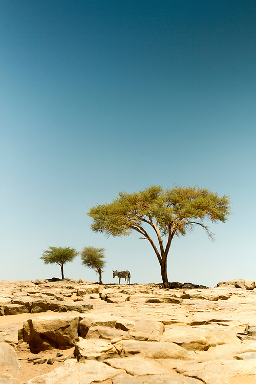 M'HAMID EL GHIZLANE, MOROCCO - 27th April 2014 - Sahara Desert landscape, beyond M'Hamid el Ghizlane, Erg Chigaga region of the fringes of the Sahara Desert in Southern Morocco