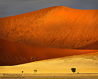 The afternoon sun paints Namibia's ochre colored sand dunes in beautiful soft light, as an Oryx buck shelters under a tree (on the right side), dwarfed by these sand giants.
