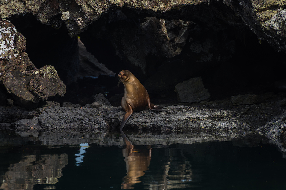 Sea lion enjoying the sun, Los Tuneles, Isla Isabela, Galapagos, Ecuador.