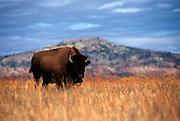 Wichita Mountain Wildlife Refuge near Lawton, OK