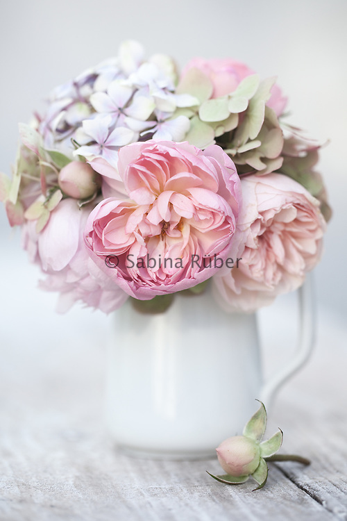 Still Life with pink English Roses and Hydrangea in white jug