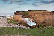 View of the pool and reeds at the outflow of the River Holford at Kilve Pill, with the Bristol Channel and cliffs in the background.