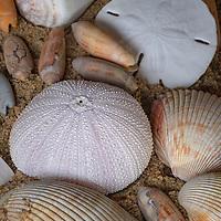 Shells on the beach, Cape Hatteras National Seashore, NC