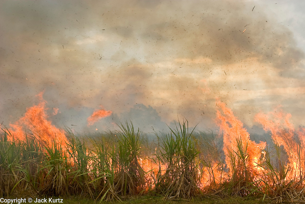 14 NOVEMBER 2005 - FRANKLIN, LA: A sugar cane field near Franklin, Louisiana is burned during the 2005 sugar cane harvest. The fields are burned during the harvest to clear shuck and waste from the fields and to facilitate the growth of the next crop. Louisiana is one of the leading sugar cane producing states in the US and the economy in southern Louisiana, especially St. Mary and Iberia Parishes, is built around the cultivation of sugar. Sugar growers in the area are concerned that trade officials will eliminate sugar price supports during upcoming trade talks for the proposed Free Trade Area of the Americas (FTAA). They say elimination of price supports will devastate sugar growers in the US and the local economies of sugar growing areas. They also say it will ultimately lead to higher sugar prices for US consumers.  PHOTO BY JACK KURTZ