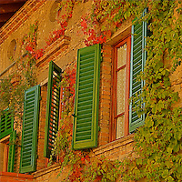 The view of  a typical tuscan windows with climbing ivy .