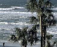 FL Shore And Palm Trees with man walking
