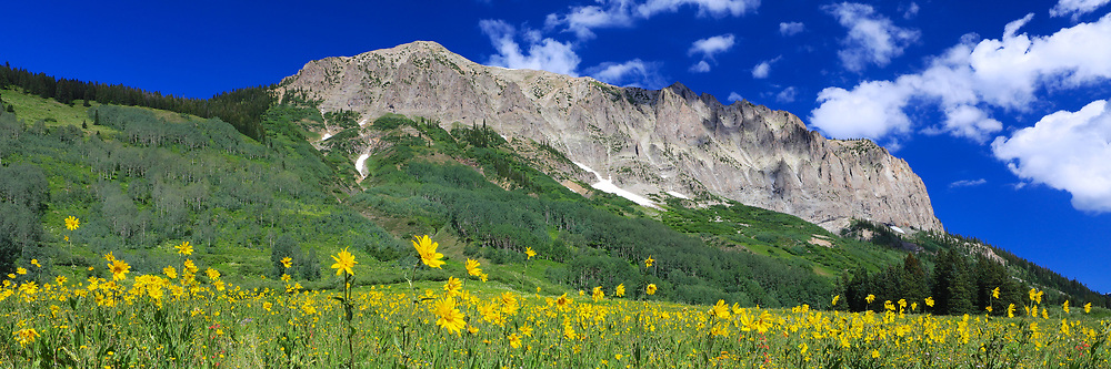 A field of wildflowers in front of Gothic Mountain near Crested Butte, Colorado.