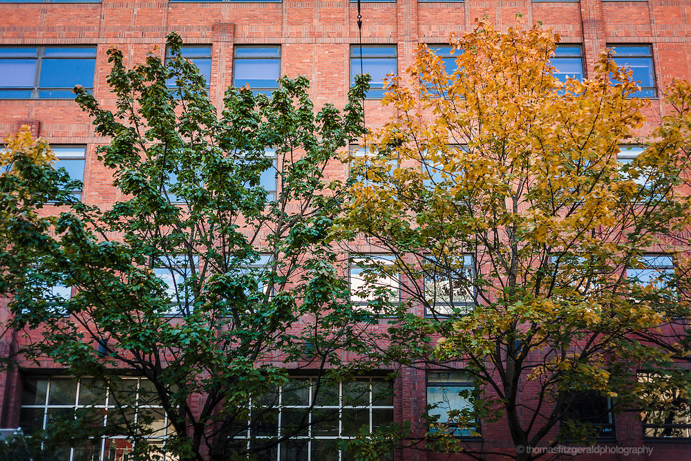Autumn in Ireland, 2012: Green and yellow trees in front of a red bricked office building