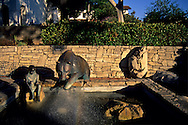 Fountain at Mission Plaza, San Luis Obispo, CALIFORNIA