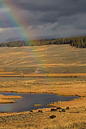 As the sun peeks through the clouds after a passing shower, a rainbow briefly appears, lighting up Yellowstone's Hayden Valley along with some of the valley's wild residents.