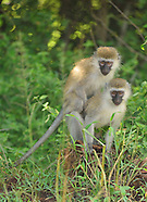 14.  Rwanda Landscapes