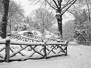 Rusic fences near Shakespeare Garden during a snow storm in Central Park, New York City