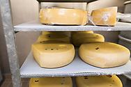 SCHWEIZ - LIEBEFELD - Käsekeller von Agroscope, der landwirtschaftliche Forschungsanstalt des Bundes. Die Käselaibe wurden seitlich angeschnitten für Proben, welche vor der Reifung genommen wurden. Die Löcher für die Proben währen der Reifung, werden alle im gleichen Muster gestochen, damit die Proben vergleichbar sind. - 23. Januar 2019 © Raphael Hünerfauth - http://huenerfauth.ch
