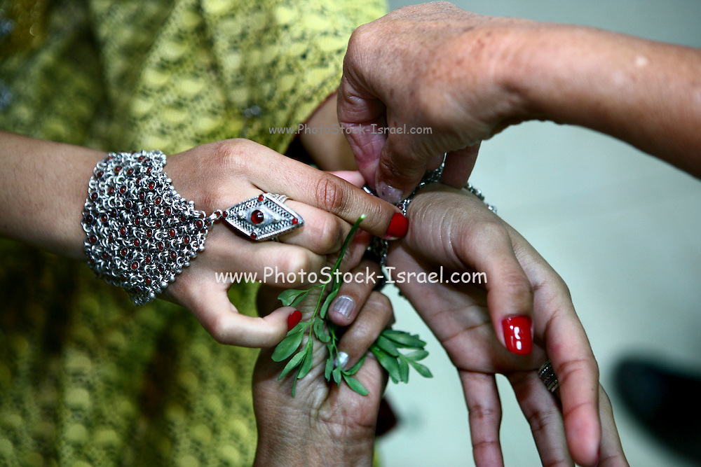 Common rue leaves used in the Henna ceremony against evil eye (superstition) . Henna celebration is a traditional oriental jewry ceremony the couple attend one week befor they get married. during the ceremony they wear traditional clothes and jewelry, dance and applying henna paste to the skin for good luck.