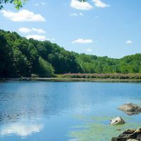 Mann's Mill Pond