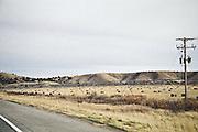Cows in southeast Idaho, near Pocatello.