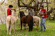 Kids, ponies, Medicine Tail Coulee, Little Bighorn River, site of Battle of the Little Bighorn, Crow Indian Reservation, Montana