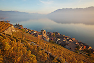 Golden-colored vineyards sit above the village of St-Saphorin, Switzerland, on the shores of Lake Geneva (Lac Léman). The Lavaux wine region is a UNESCO World Heritage site.
