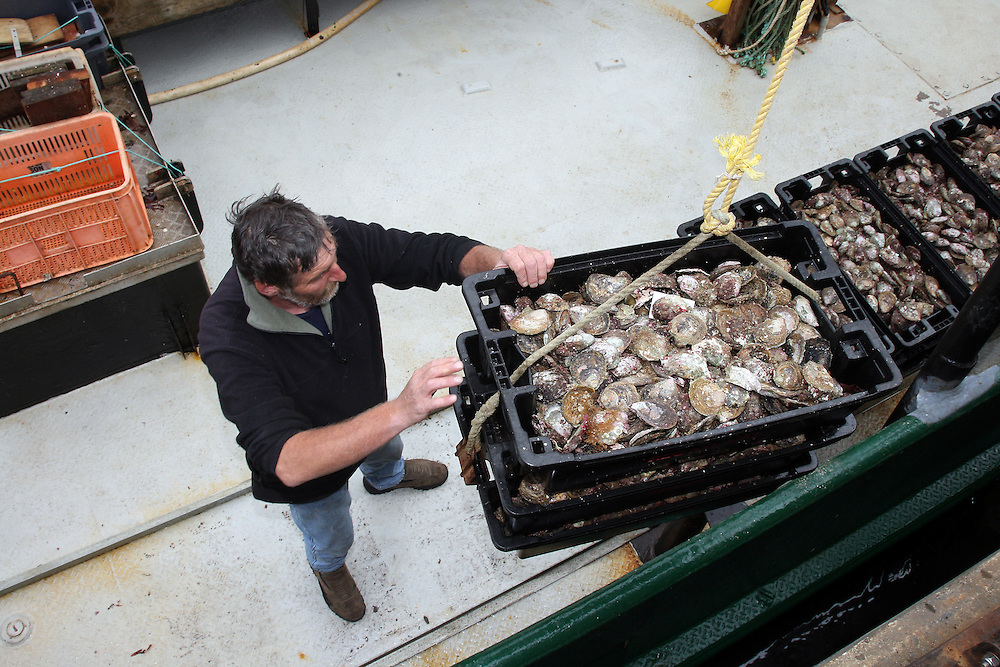 The first  haul of Bluff oysters are lifted from  the Toiler, Bluff, New Zealand, Tuesday, March 01, 2011. Credit:SNPA / Dianne Manson.