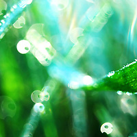 Nature's Diamonds - Close up of droplets of dew on green grass.