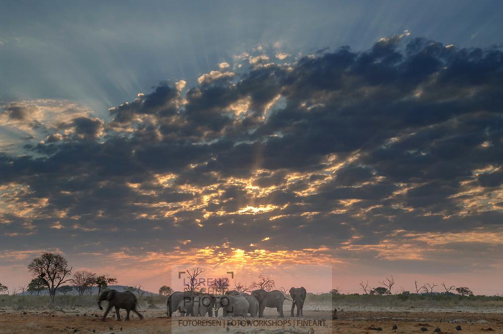 Impressionen  mit Elefanten-Bullen aus der Region Savuti im Chobe Nationalpark am frühen Morgen mit Bewölkung.