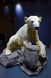 15.03.2016, Museum fuer Naturkunde, Berlin, GER, Naturkundemuseum Berlin, im Bild Praeparat des Eisbaer Knut (Ursus maritimus) // Exhibits in the Natural History Museum Museum fuer Naturkunde in Berlin, Germany on 2016/03/15. EXPA Pictures © 2016, PhotoCredit: EXPA/ Eibner-Pressefoto/ Schulz<br /> <br /> *****ATTENTION - OUT of GER*****