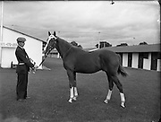 22/09/1953<br /> 09/22/1953<br /> 22 September 1953<br /> Ballsbridge September Bloodstock, Horse Sales at the RDS, Dublin.