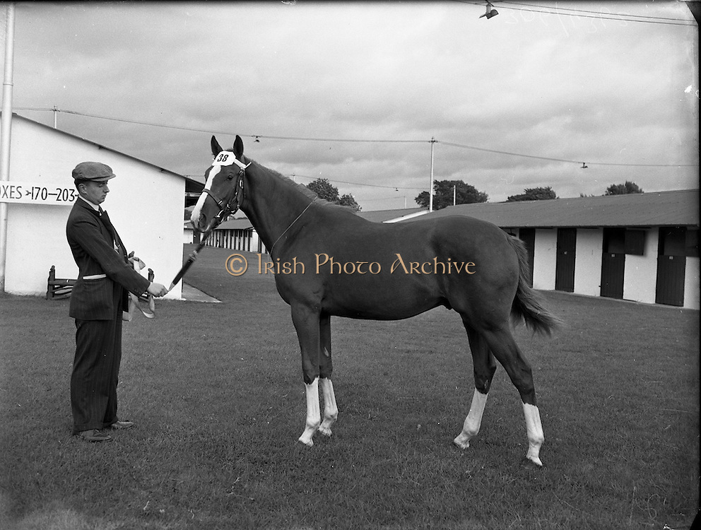 22/09/1953<br /> 09/22/1953<br /> 22 September 1953<br /> Ballsbridge September Bloodstock, Horse Sales at the RDS, Dublin.
