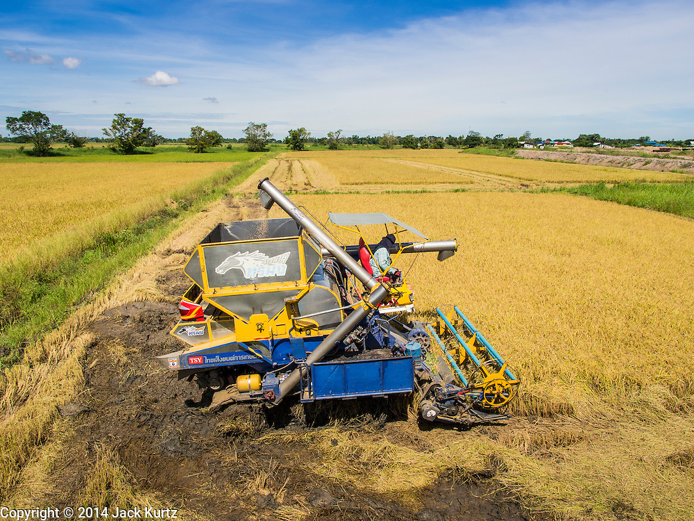 08 SEPTEMBER 2014 - BANG BAN, PHRA NAKHON SI AYUTTHAYA, THAILAND: Rice being harvested on a farm in Ban Bang, Phra Nakhon Si Ayutthaya province north of Bangkok. Rice farmers in central Thailand are harvesting their rice crop. The race is on to get the rice harvested before the Chao Phraya River and its tributaries start their cycle of annual floods. Although the central plains have gotten less rain than normal, communities in northern Thailand are experiencing a heavy monsoon and flood gates upriver of the central plains have been opened. The flood waters are expected to reach Phra Nakhon Si Ayutthaya province by the middle of September. This year's rice crop is expected to be lower than last year's because many farmers planted less rice because the government subsidy program ended.       PHOTO BY JACK KURTZ