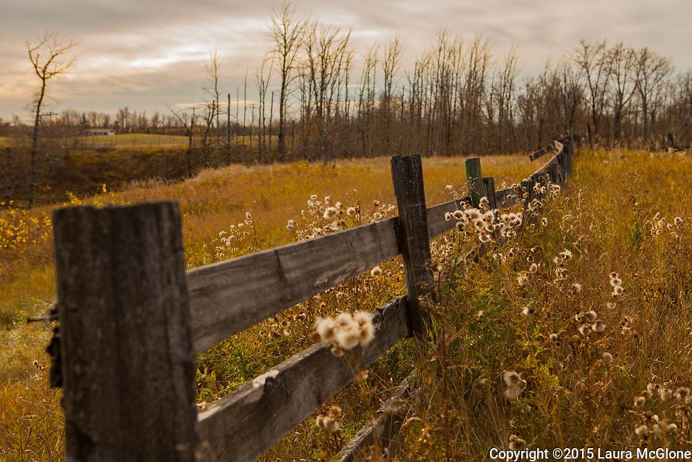 Autumn Fencerow, Alberta Canada