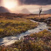 One from way back in Sep 2011 up on Rannoch Moor. Shot with the old canon7D and originally processed in mono. The only shot I ever got of the old craggy tree that's sadly no more.