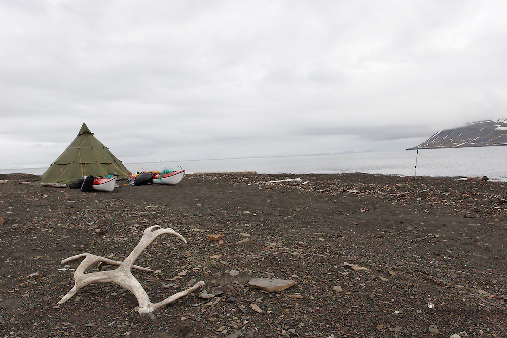 Antler from Svalbard raindeer outside the camp