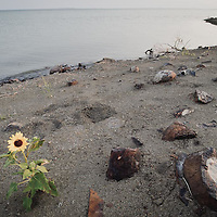 flower on shore fort peck lake