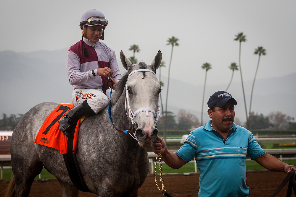 January 10 2014: Calculator with jockey Elvis Trujillo up wins the Sham Stakes GIII at Santa Anita Park in Arcadia CA. Alex Evers/ESW/CSM