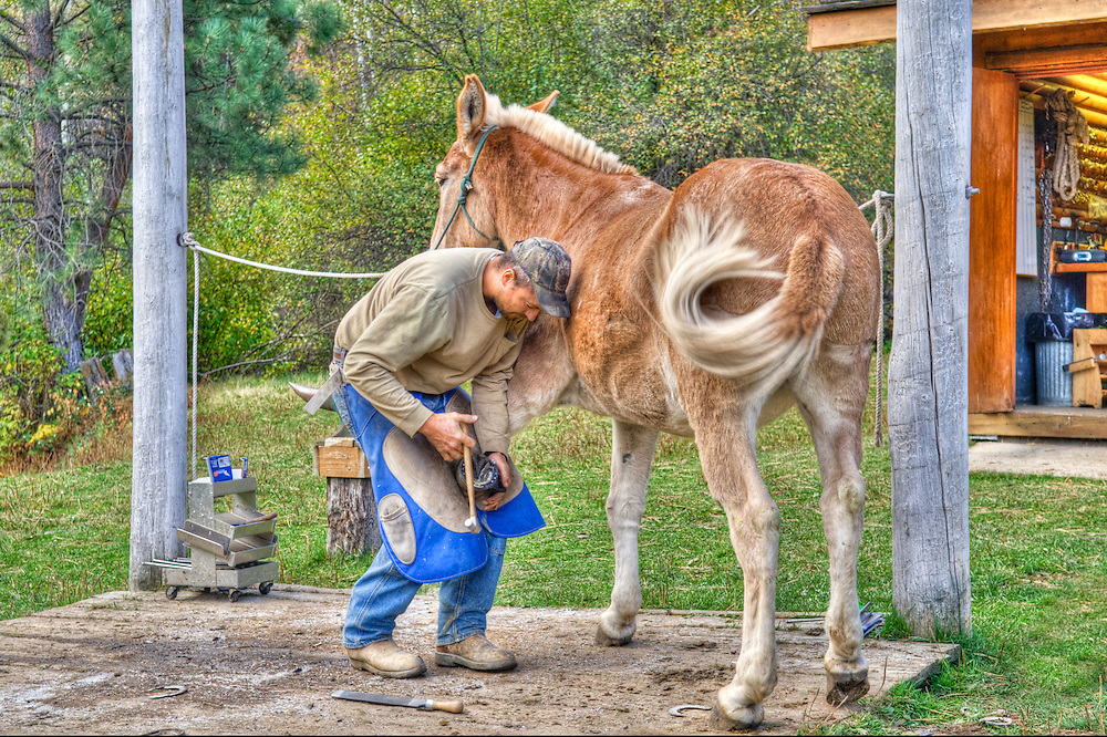A farrier shoeing a horse. HDR