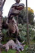 """Roma 30 Dicembre 2014<br /> """"Dinosauri in Carne e Ossa"""", mostra di dinosauri e altri animali preistorici estinti, a grandezza naturale, allestita dall' Associazione paleontologica ambientale, all'Università La Sapienza di Roma. La mostra sara aperta fino al 31 Maggio 2015. La scultura di Tyrannosaurus rex in basso un Triceratops Horridus<br /> Rome December 30, 2014<br /> """"Dinosaurs in Flesh and Bones"""", an exhibition of dinosaurs and other prehistoric animals extinct, to life-sized, prepared by Association paleontological environmental, a La Sapienza University of Rome. The exhibition will be open until May 31, 2015. The sculpture of Tyrannosaurus rex  under a Triceratops Horridus"""