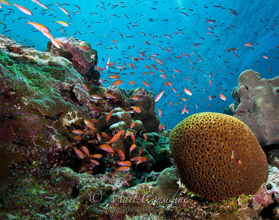 Abundant Sea Life, Yap Micronesia (Photo by Matt Considine - Images of Asia Collection)