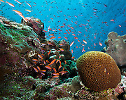 Abundant Sea Life, Yap Micronesia (Photo by Matt Considine - Images of Asia Collection)