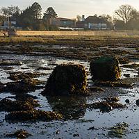 Rural view in Bosham, West Sussex