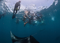 Mantas (Manta birostis) predictably found Hanifaru Bay; fiasco ensued after the location becomes known; sometime people outhumbered dives 5 to 1.