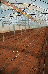 Empty greenhouse near Havana Cuba; showing irrigation pipes set into the soil,