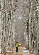 Mamakating, New York - A man walks on a trail at the Bashaskill Wildlife Management Area on March 26, 2011.