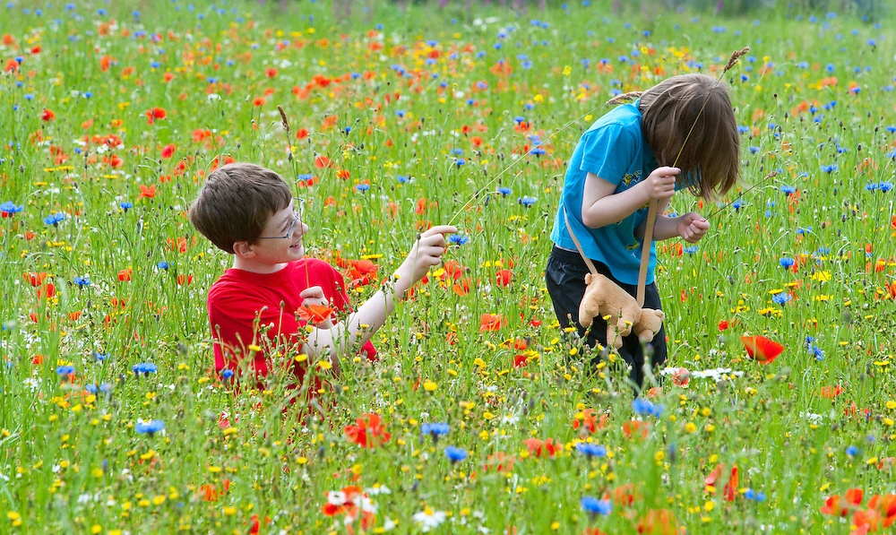 Children in a wildflower meadow,  Scotland