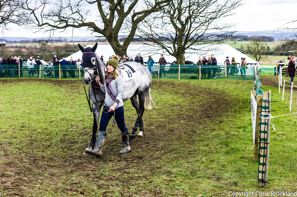 Corbridge, Northumberland, England, UK. 28th February 2016. Racehorse Viocometti parades in the paddock prior to racing at the Tynedale Hunt annual Point to Point horse racing fixture.