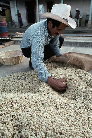 January 1983, San Pedro, Lake Atitlan, Guatemala --- A worker fills a bag with dried coffee beans, San Pedro, Guatemala. --- Image by © Owen Franken