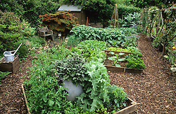 Small vegetable garden with wooden raised beds enclosed by rustic post screen. Bark paths