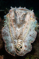 """Cuttlefish """"poses"""" for a portrait<br /> <br /> Shot in Indonesia"""