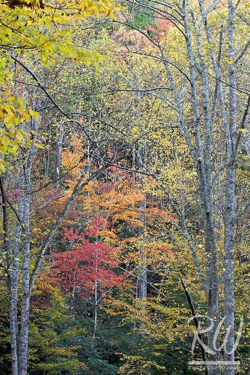 Fall Colors in the Red River Gorge Geological Area, Daniel Boone National Forest, Kentucky