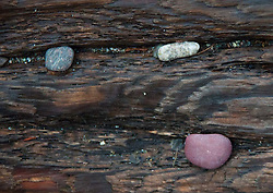 Driftwood and Rocks, Jones Island, San Juan Islands, Washington, US